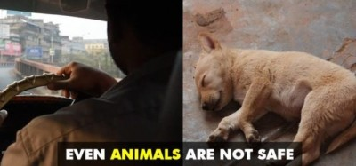34 Year Old Taxi Driver Raped Female Puppy & Dumped Her In Drain Where She Died!